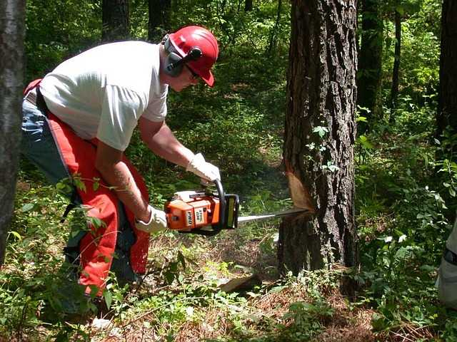 ppe for chainsaw work
