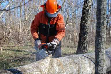 Cordless Chainsaws Review
