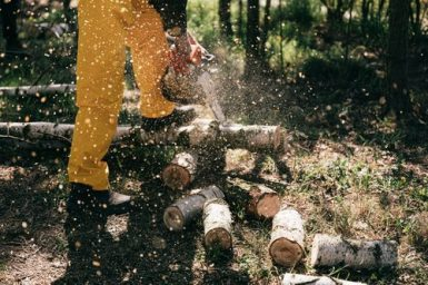 Free Chainsaw Safety Courses Online